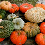 How to pick the perfect heirloom pumpkin
